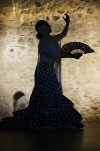 flamenco-1046485_960_720